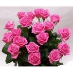 """Розовая роза """"Аква"""" купить:"""