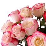 Роза свитнес, купить