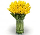 Желтый тюльпан купить: