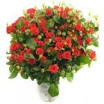 Красные кустовые розы купить: