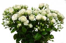 Букет кустовых роз 35 штук