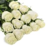 Белая роза Мондиаль, купить: