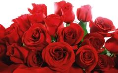 Красная роза Фридом, купить: