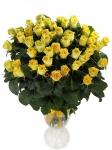 """Желтая роза  """"Илиос"""" купить:"""