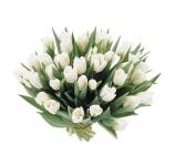 Белый тюльпан купить: